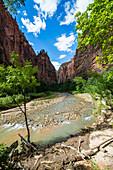 The cliffs of the Narrows in the Zion National Park, Utah, United States of America, North America