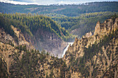 The Lower Falls in the Grand Canyon of Yellowstone, Yellowstone National Park, UNESCO World Heritage Site, Wyoming, United States of America, North America