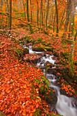 A small stream running through Charles Wood, Dartmoor National Park, Devon, England, United Kingdom, Europe