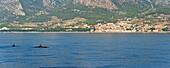 Dolphins seen near Brac Island on the Dalmatian Coast, Adriatic, Croatia, Europe