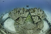 Diver explorers the Thunder dome, Turks and Caicos, West Indies, Caribbean, Central America