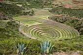 Moray Incan agricultural laboratory ruins near Maras, Sacred Valley, Peru, South America