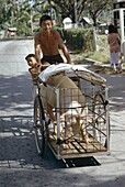 Man transporting his pig on a tricycle, Langkawi Island, Malaysia, Southeast Asia, Asia