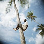 Boy climbing palm tree, Jambiani, Zanzibar, Tanzania, East Africa, Africa