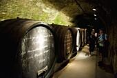 People and wine barrels inside cellar of Loisium Winery, Langelois, Niederosterreich, Austria, Europe