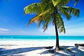 Palm tree, white sandy beach and Indian Ocean, Jambiani, island of Zanzibar, Tanzania, East Africa, Africa