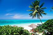 View through palm trees towards beach and Indian Ocean, Jambiani, island of Zanzibar, Tanzania, East Africa, Africa