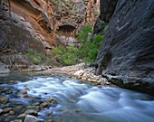 Virgin River flowing through the Virgin Narrows, Zion National Park, Utah, United States of America, North America
