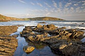 Evening sunlight bathes the rocky shores and cliffs golden at Wembury Bay in South Devon,  England,  United Kingdom,  Europe