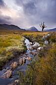 Stream running through Rannoch Moor wilderness, Highlands, Scotland, United Kingdom, Europe