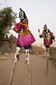 Masked ceremonial Dogon dancers on stilts near Sangha, Bandiagara escarpment, Dogon area, Mali, West Africa, Africa