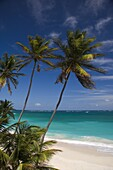 Palm trees and surf at Bottom Bay on the east coast of Barbados, Windward Islands, West Indies, Caribbean, Central America