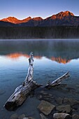 Frosted driftwood in the shallows of Patricia Lake at first light, Jasper National Park, UNESCO World Heritage Site, Alberta, Rocky Mountains, Canada, North America