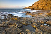 Early morning sunshine glows golden on the cliffs at Seacombe on the Isle of Purbeck, Jurassic Coast, UNESCO World Heritage Site, Dorset, England, United Kingdom, Europe