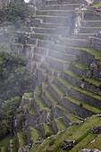 Agricultural terraces in the Inca city, Machu Picchu, UNESCO World Heritage Site, Peru, South America
