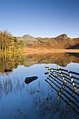 Mirror like reflections at Blea Tarn, Lake District National Park, Cumbria, England, United Kingdom, Europe