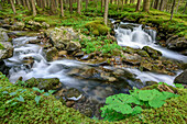 Two streams flowing through forest, Passo San Pellegrino, Dolomites, UNESCO World Heritage Dolomites, Trentino, Italy