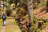 Oberharzer Wasserregal, Wasserwirtschaftssystem fuer Bergbau, Dammgraben, Umleitung, horizontal, Speicherung Wasser, Wandern, Harz, Unesco, Weltkulturerbe, Niedersachsen, Deutschland