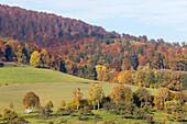 Felder, Huegel, Herbst, Mischwald, Landwirtschaft, lieblich, idyllisch, laendlich, Niedersachsen, Deutschland