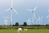 wind farm, cows, agricultural landscape, Cuxhaven, Lower Saxony, Germany