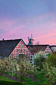 Blooming trees in front of windmill and half-timbered houses with thatched roofs, near Twielenfleth, Altes Land, Lower Saxony, Germany