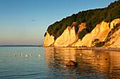 Swans in front of the chalk cliff, National Park Jasmund, Ruegen island, Baltic Sea, Mecklenburg-West Pomerania, Germany