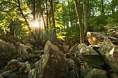 Rock formation Felsenmeer, near Hemer, Sauerland region, North Rhine-Westphalia, Germany