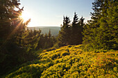 Sunset at Schneekopf hill, nature park Thueringer Wald,  Thuringia, Germany