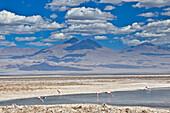 Salt lake Salar de Atacama with Laguna Chaxa und Andean Flamingos, Phoenicoparrus andinus, volcano Licancabur, San Pedro de Atacama, Atacama Wüste, Altiplano, Valle de la Luna, Valley of the moon, Atacama desert, National Reserve, Reserva Nacional Los Fla
