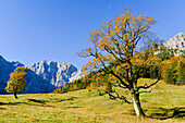 autumnal colored maple and larch trees at Engalm with view to Laliderer Wände, Großer Ahornboden, Hinterriß, Engtal valley, Northern limestone alps, Karwendel Mountains, Tyrol, Austria, European Alps, Europe
