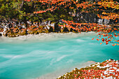 autumn colors at turquois river Rißbach valley with red leafs of maple tree , Großer Ahornboden, Hinterriß, Engtal valley, Northern limestone alps, Karwendel Mountains, Tyrol, Austria, European Alps, Europe