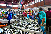 Fish stall at the Fish market, market hall, Olhao, Algarve, Portugal