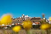 Flowery meadow in Estremoz, Alentejo, Portugal