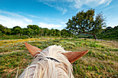 View from a horse, riding holidays, Cercal, Alentejo, Portugal