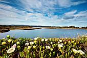Lagoon, Parque Natural da Ria Formosa near Faro, Algarve, Portugal