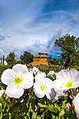 Flowers in roman ruins, archaeological park, Milreu, Algarve, Portugal