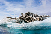 Iceberg with moraine material and icicles at Booth Island, Antarctica, Polar Regions