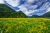 Spring blooms in Valtellina, near the village of Sirta. Lombardy, Italy, Europe