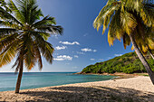 Palm trees thrive on the beautiful beach of Hawksbill which houses one of the most luxurious resorts in the Caribbean, Antigua, Leeward Islands, West Indies, Caribbean, Central America