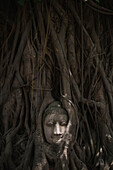A Buddha head peers out from a tree, Ayutthaya, Thailand
