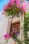 Blossoming flowers and a vine decorate the exterior of a house, Chania, Crete, Greece