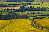 Yellow and green fields, North Yorkshire, England