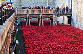 Ceramic poppies at the Tower of London commemorating the 100th anniversary of World War One, London, England