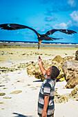 Feeding a large seabird, Nauru Island