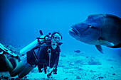 Diving with a Grouper, Palau, Micronesia