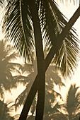 Crossed palm tree trunks at dawn, near Unawatuna, Thalpe, Sri Lanka