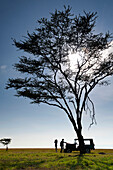 Client and guide having breakfast beneath large acacia tree on grassland, Ol Pejeta Conservancy, Kenya