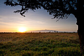 Acacia tree with Mt Kenya behind at dawn, Ol Pejeta Conservancy, Kenya