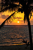 'Silhouette of a coconut tree along the shoreline with an orange sun and clouds in the sky at sunrise; Akumal, Quintana Roo, Mexico'