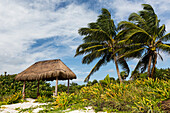'Coconut trees with thatched shelter on beach with clouds and blue sky; Akumal, Quintana Roo, Mexico'